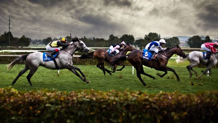 How to bet on a horse to lose on betfair best sports betting blogs reddit
