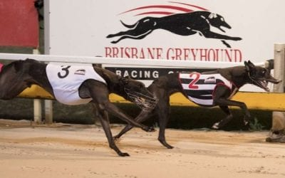 04/03/21 – Thursday Greyhound Racing Tips for Albion Park