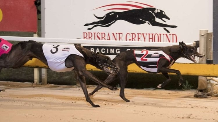 08/07/21 – Thursday Greyhound Racing Tips for Albion Park
