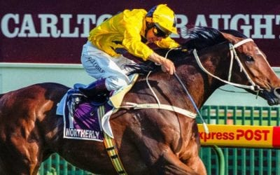 Northerly Racehorse