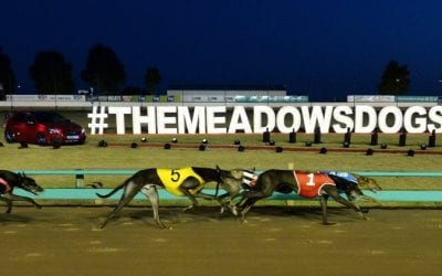 the meadows greayhound racing tips