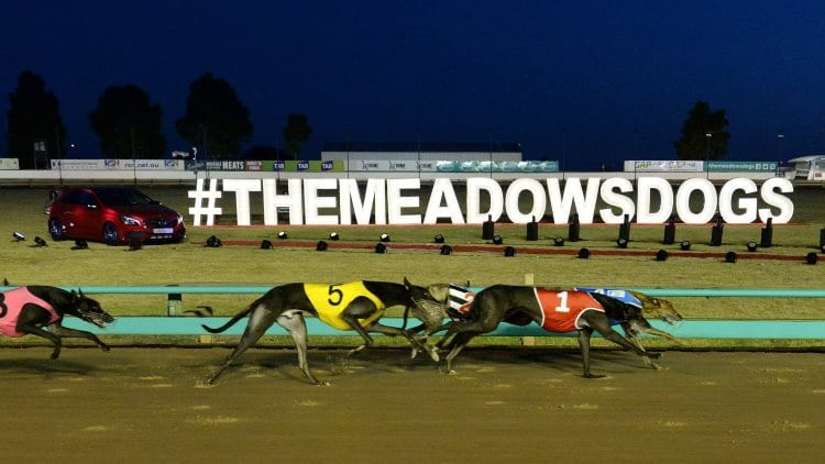 21/10/20 – Saturday Greyhound Racing Tips for The Meadows