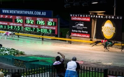 27/02/21 – Saturday Greyhound Racing Tips for Wentworth Park